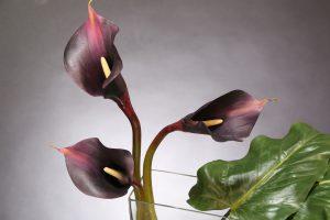 calla lily arrangemant
