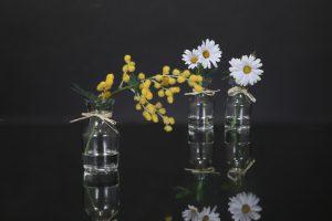 春の小花〈ミモザ〉